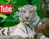 Youtube añade soporte HDR para vídeos de amplio rango dinámico