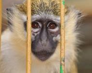 BMW, Volkswagen y Daimler se enfrentan a una crisis de reputación por financiar experimentos poco éticos con humanos y monos