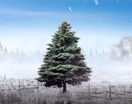 Toyota centra su campaña de Navidad en el cuidado de la naturaleza